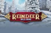 Reindeer Wild Wins - le nouveau jeu proposé par le fournisseur Genesis Gaming